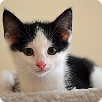 Adopt A Pet :: Mason - Port Republic, MD
