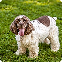 Adopt A Pet :: Jake 3yr Adopted - Mentor, OH