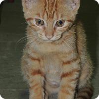 Adopt A Pet :: Baby - Ortonville, MI