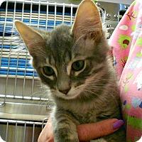 Adopt A Pet :: Hershey - Chesapeake, VA