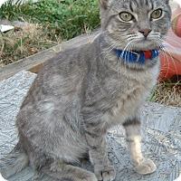 Adopt A Pet :: Frodo - Farminton, AR