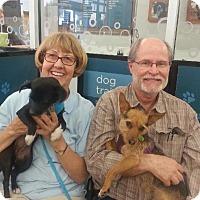 Adopt A Pet :: Francene (aka Frannie) - Phoenix, AZ