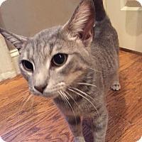 Adopt A Pet :: Ruby - Philadelphia, PA