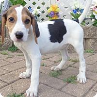 Adopt A Pet :: Stargaze - West Chicago, IL