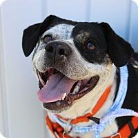 Adopt A Pet :: RaeLynn - Pinehurst, NC