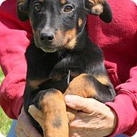 Adopt A Pet :: Dutchess - Glastonbury, CT