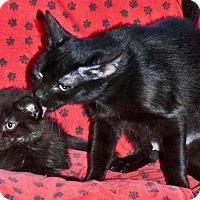 Adopt A Pet :: Ruby - Sunderland, ON