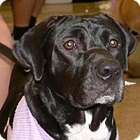 Adopt A Pet :: BECCA - Fort Lauderdale, FL