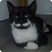 Adopt A Pet :: Stewart - Hamburg, NY