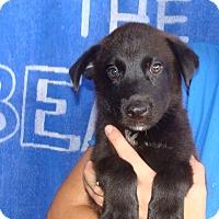 Adopt A Pet :: Reebok - Oviedo, FL