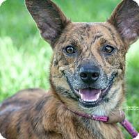 Adopt A Pet :: Scar - Gainesville, FL