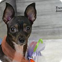 Adopt A Pet :: Frannie - Conroe, TX
