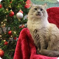 Adopt A Pet :: Cricket - Greensboro, NC