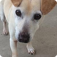 Adopt A Pet :: Odie - Chula Vista, CA