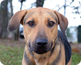 Hound (Unknown Type) Mix Dog for adoption in LAFAYETTE, Louisiana - ROMAN