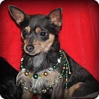 Adopt A Pet :: Lexie Jo - DuQuoin, IL