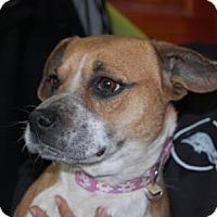 Adopt A Pet :: Landry - Brooklyn, NY