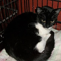 Adopt A Pet :: Bell - Lacon, IL