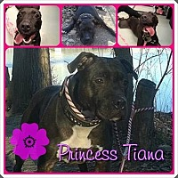 Adopt A Pet :: Tiana - Louisiana, MO