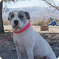 Adopt A Pet :: Bella - Costa Mesa, CA