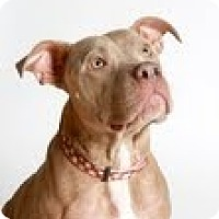 Adopt A Pet :: Zola - Justin, TX