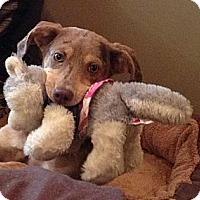 Adopt A Pet :: Kalli - Richmond, VA