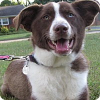 Adopt A Pet :: Bella - Nashville, TN