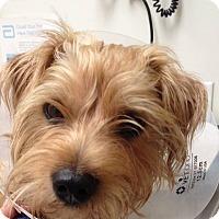 Adopt A Pet :: GEORGE HARRISON - Boca Raton, FL