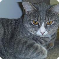 Adopt A Pet :: Peter - Hamburg, NY