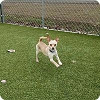 Adopt A Pet :: Murphy - Meridian, ID