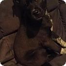 Adopt A Pet :: Jackson NJ - Layla