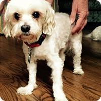 Adopt A Pet :: Litney - Wilmington, DE