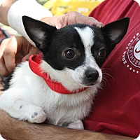 Adopt A Pet :: Tinkerbell - Daleville, AL