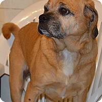 Adopt A Pet :: Ginger - Prole, IA