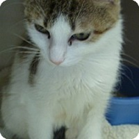 Adopt A Pet :: Brandy Lee - Hamburg, NY