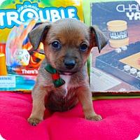 Adopt A Pet :: Boggle - Irvine, CA