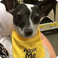 Adopt A Pet :: Patti - Chandler, AZ