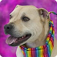 Adopt A Pet :: Tete - Cincinnati, OH