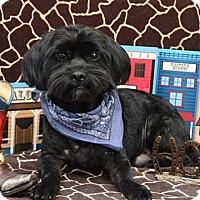 Adopt A Pet :: Orbit Montgomery - Urbana, OH