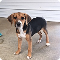 Adopt A Pet :: Freckles - Russellville, KY