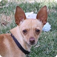Adopt A Pet :: Andy - Edmonton, AB