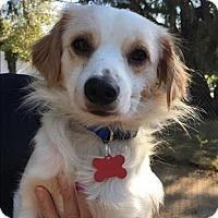 Adopt A Pet :: Oliver - Encino, CA
