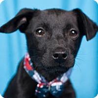 Adopt A Pet :: Atlas - Minneapolis, MN