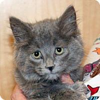Adopt A Pet :: Montgomery - Wildomar, CA