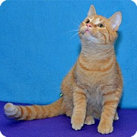 Adopt A Pet :: Konrad - Lenexa, KS