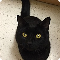 Adopt A Pet :: Ebony - Salem, NH