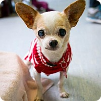 Adopt A Pet :: Casper - San Francisco, CA