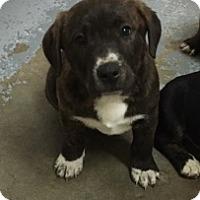 Adopt A Pet :: 6041 - Calhoun, GA