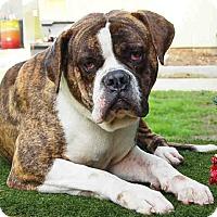 Adopt A Pet :: Mr. Magoo ID #A1658581 - Beverly Hills, CA