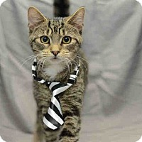 Adopt A Pet :: Fiero - St. Cloud, FL